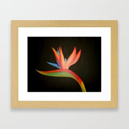 Bird of Paradise Collection Framed Art Print