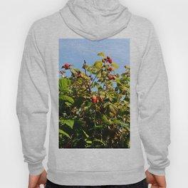 Raspberries reaching for the sky Hoody