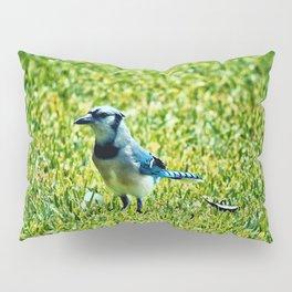 Blue Jay Pillow Sham