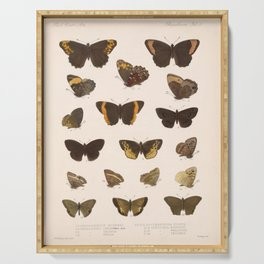 Vintage Scientific Hand Drawn Illustration Anatomy Of Butterfly Insect Patterns Biology Art Serving Tray