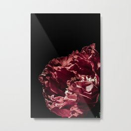 Red Iceland Poppy Detailed Photograph Metal Print