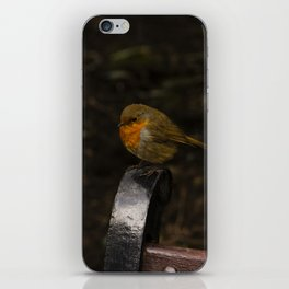 Resting Robin iPhone Skin