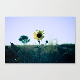 On The Way To California Canvas Print