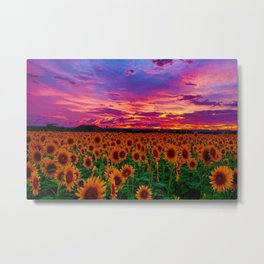 Sunflower fields with beautiful sunset - Jeanpaul Ferro Metal Print
