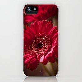 Beautiful Red Gerbera iPhone Case