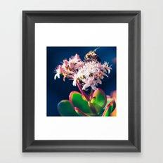 Crassula ovata Jade Flowers and Honey Bee Kula Maui Hawaii Framed Art Print