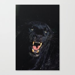 Black Leopard (Panther) Canvas Print