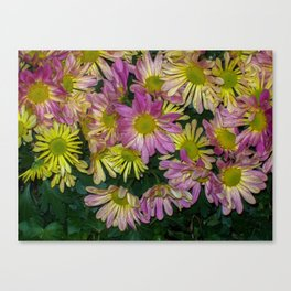 Flowers having a meeting Canvas Print