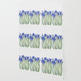 Blue Iris, Illustration Wallpaper