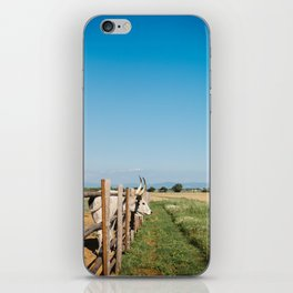 Horny cow behind wooden fence  iPhone Skin