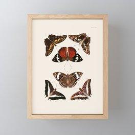 Vintage Butterfly Chart III Framed Mini Art Print