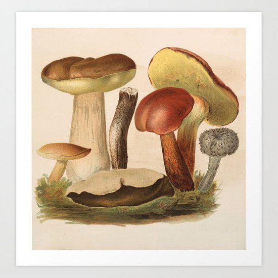 wild mushrooms by baconfactory