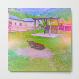 Clever Donkey Metal Print