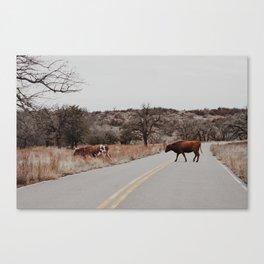 Longhorn Jam Canvas Print