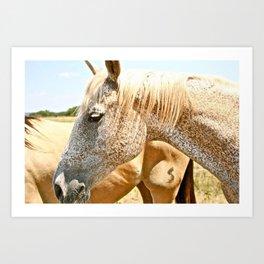 Abilene Horses Art Print