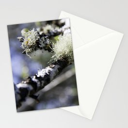A tuft of moss on a Birch tree Stationery Cards