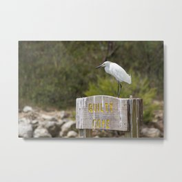 Snowy Egret at Quilty Cove Metal Print