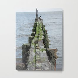 Birds and Barnacles Metal Print