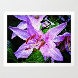 Lilies On Black Background Art Print