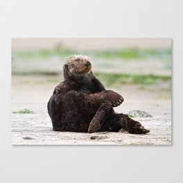 Zen Otter Canvas Print