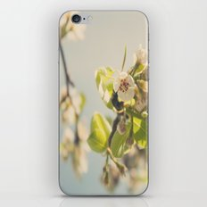 Pear Tree Blossom iPhone Skin