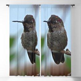 Juvenile Male Anna's Hummingbird Blackout Curtain