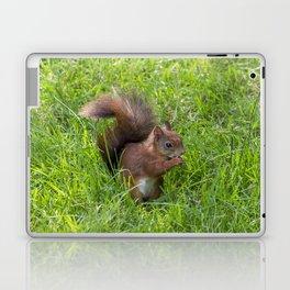 Red Squirrel. Laptop & iPad Skin