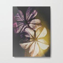 Spring blooming Tas 03 Metal Print