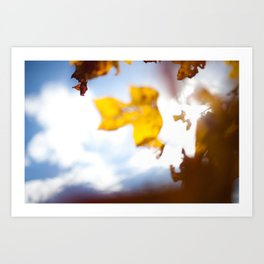 HOME: EARLY OCTOBER, YARD TREES Art Print