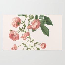 Rosa Multiflora Rug