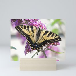 Western Tiger Swallowtail on the Neighbor's Butterfly Bush Mini Art Print