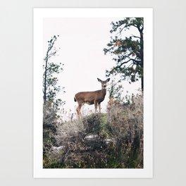Ohh Deer! Art Print