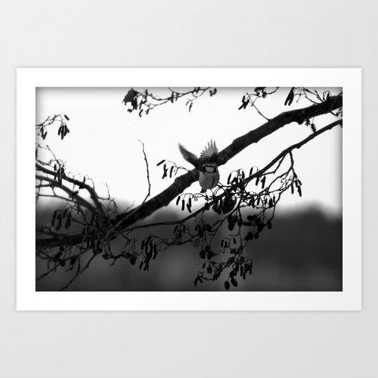 Free like a bird Art Print