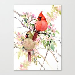 Cardinal Birds and Spring, cardinal bird design Canvas Print