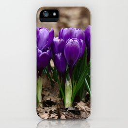Purple Spring - crocuses herald the start of Spring iPhone Case