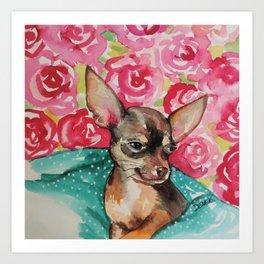 lola chihuahua Art Print
