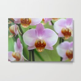Outrageous orchid Metal Print