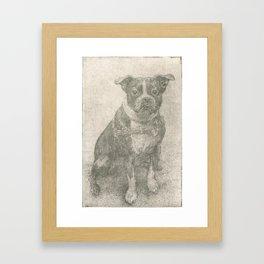 Henry the Boston Terrier  Framed Art Print