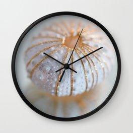 Sea Urchin Shell Wall Clock