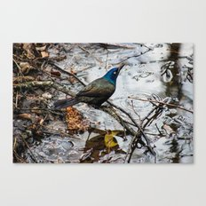Un-Freebird Canvas Print