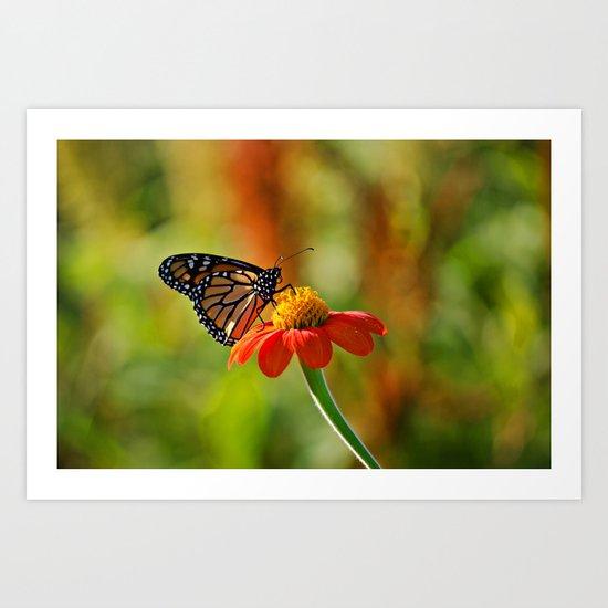 Monarch Butterfly #2 Art Print
