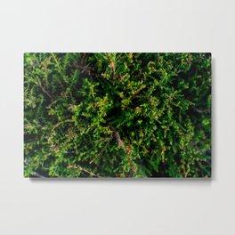 Coniferous Metal Print