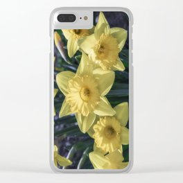 Spring time Daffodils Clear iPhone Case