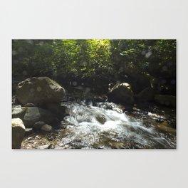 trickling creek Canvas Print