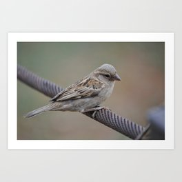 Pilanesberg Bird 01 Art Print