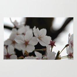 Sakura blossoms up close Rug