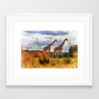 giraffes Framed Art Prints featuring Giraffes by Photography by Terrance