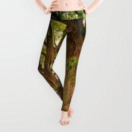 Tree Leggings