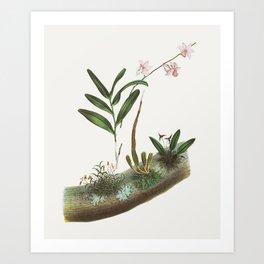 Vintage Orchid Illustration Art Print