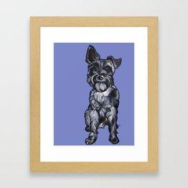 Rupert the Miniature Schnauzer Framed Art Print